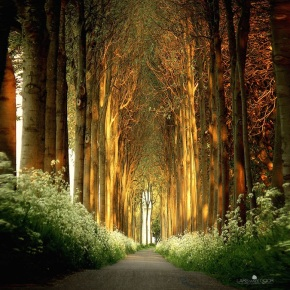Natural Cathedral Lars van der Goor
