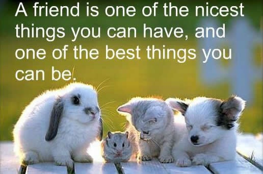 Inspiring Animal Quotes Cute Curious Critters Club