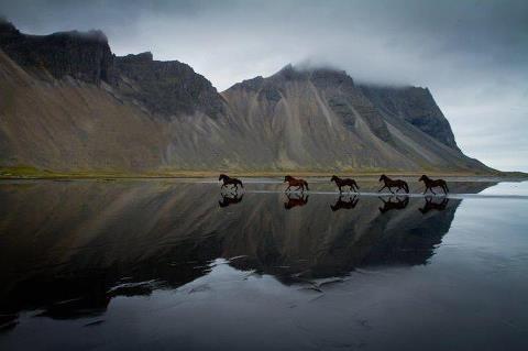 horses at the ocean