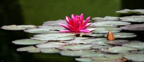 spiritual water lilly