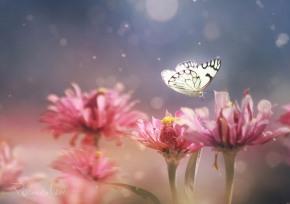 nia – Lee Peilingnia – Lee Peiling Butterfly and Pink flowers