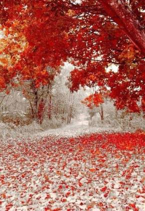 winter and fall earth porn
